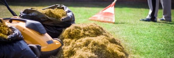 landscaping Déchaumage de pelouse