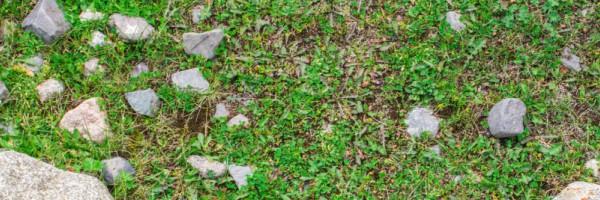 landscaping Retrait de la roche sur la pelouse